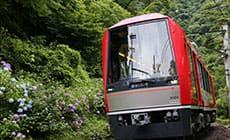 Hakone hydrangea train